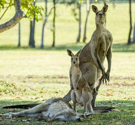 5 bí quyết để trở thành chuyên gia đầu tư bất động sản Úc